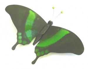 schmetterling grün k